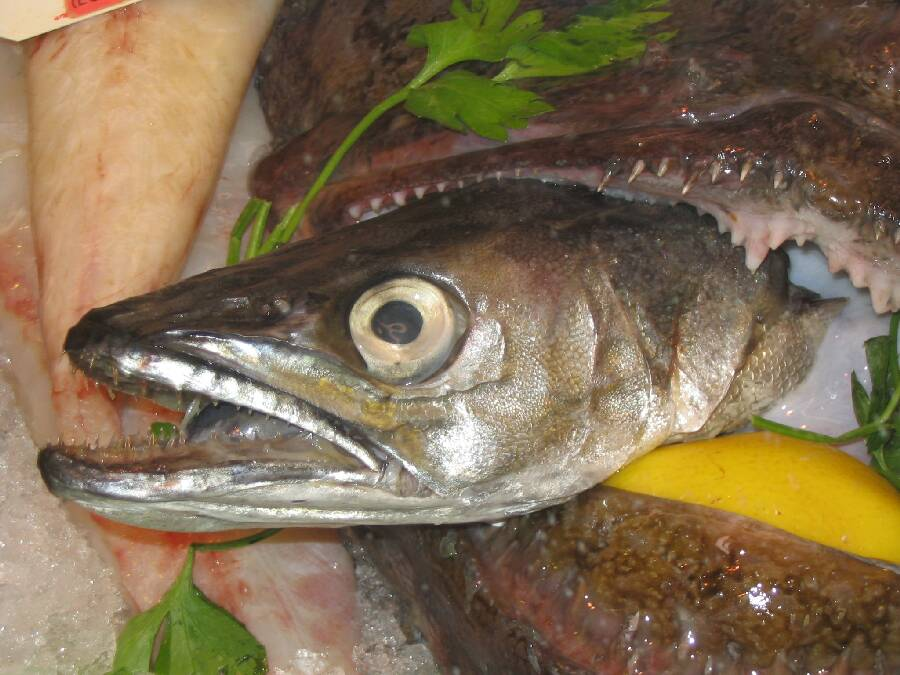 Fischleiche in Markthalle