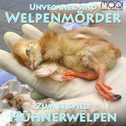 Welpenmörder Hühnerwelpen Küken - Auslegeaktion mit Leichen aus Hühneraufzucht