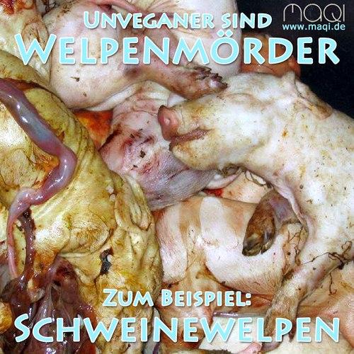 Welpenmörder Schweinewelpen Ferkel - Mülltonne Schweineaufzucht