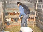 Hühnerbefreiung aus Freilandhaltung 08.07.07