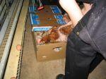 Hühnerbefreiung Legebatterie 2005